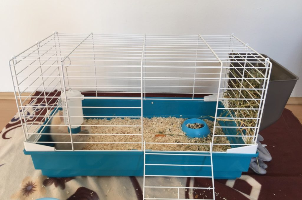 how to set up rabbit cage