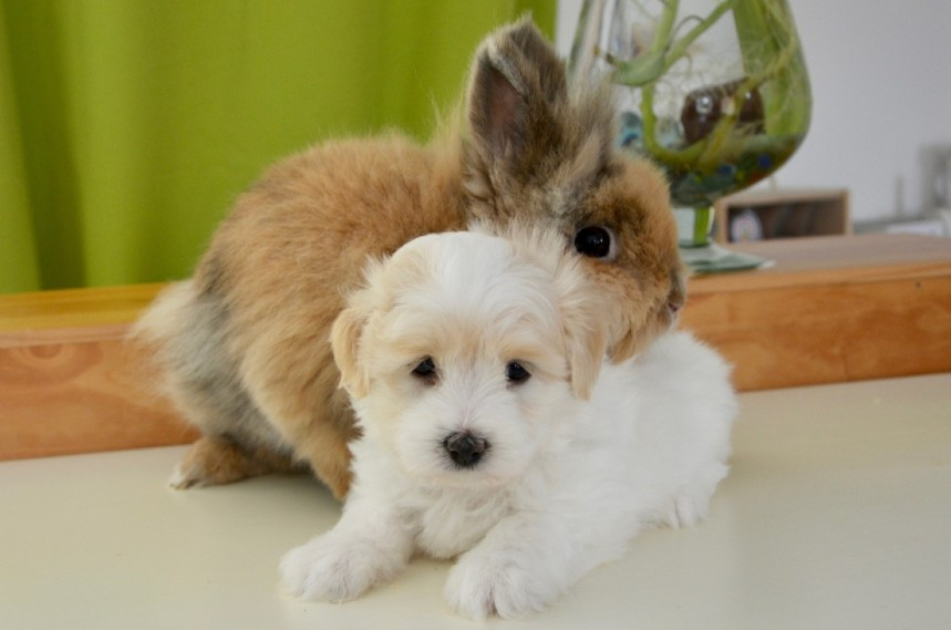 can rabbits and dogs live together