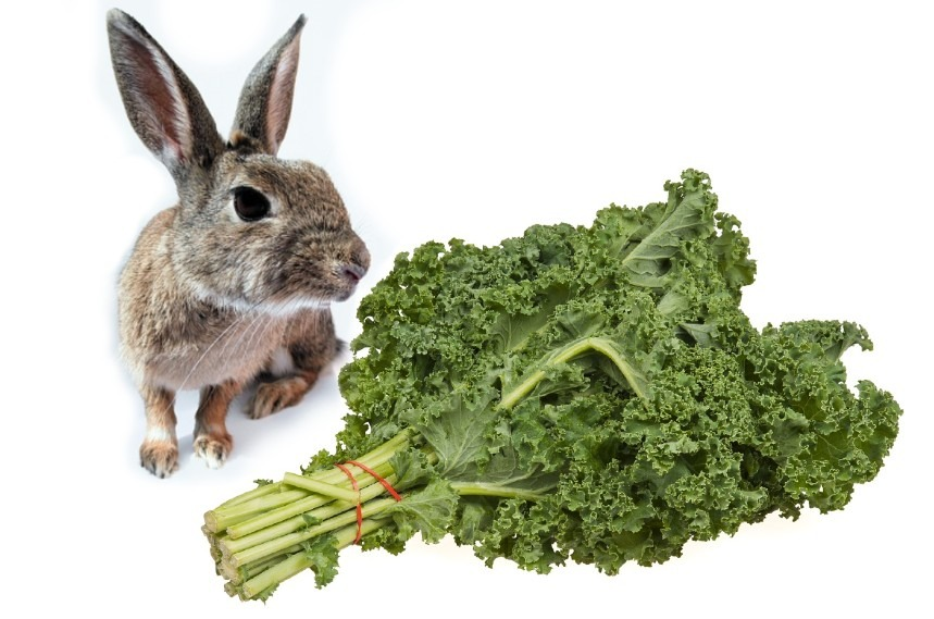 can rabbits eat kale