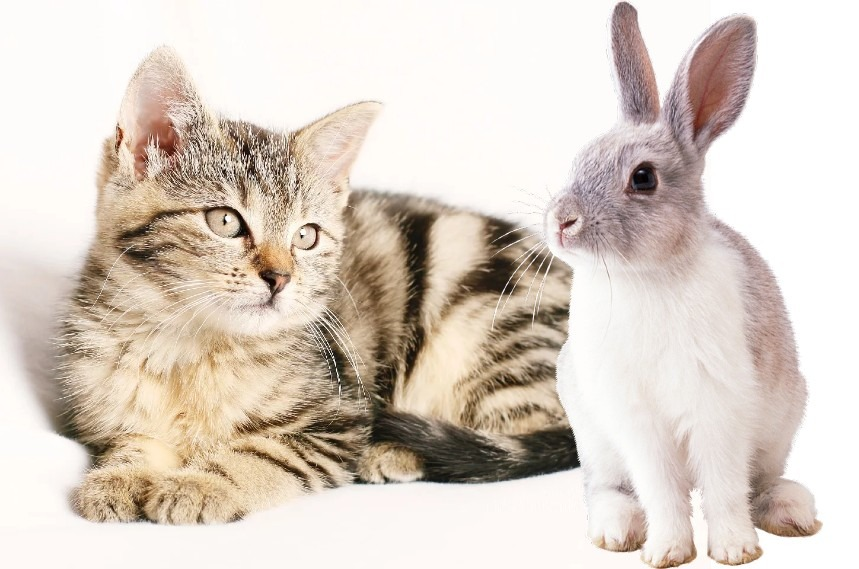 can cats and rabbits be friends