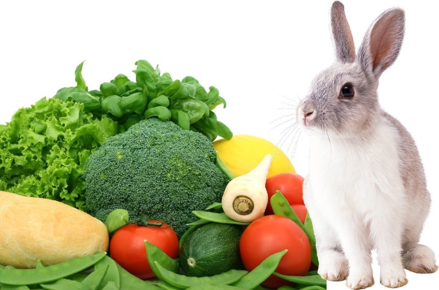 What Vegetables Can Rabbits Eat What Vegetables Are Bad