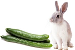 Lionhead Rabbit Page 5 Of 7 Care Diet Facts For