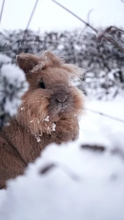 Can Rabbits Live Outside in winter