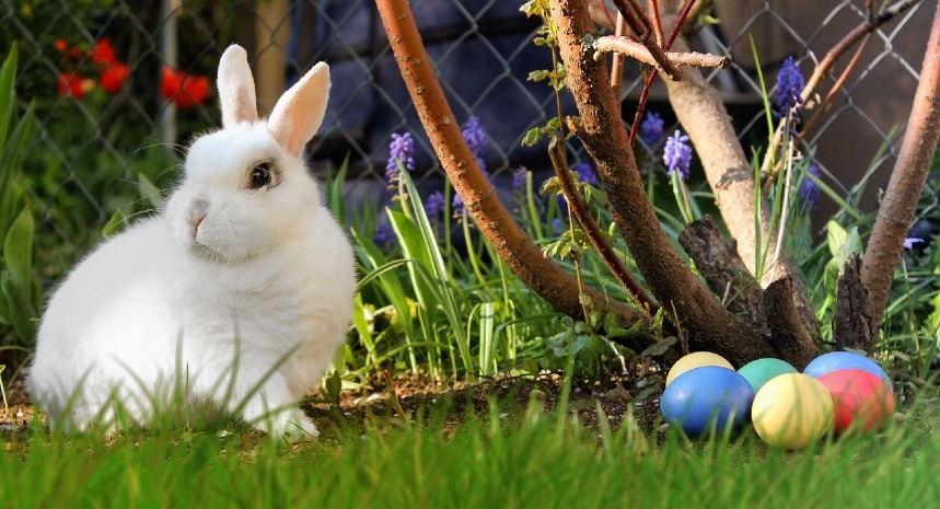 Easter bunny, history origin and meaning