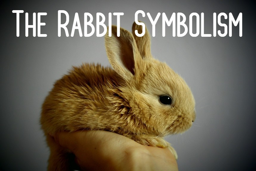 The Rabbit Symbolism -Spirit Animal & Meaning