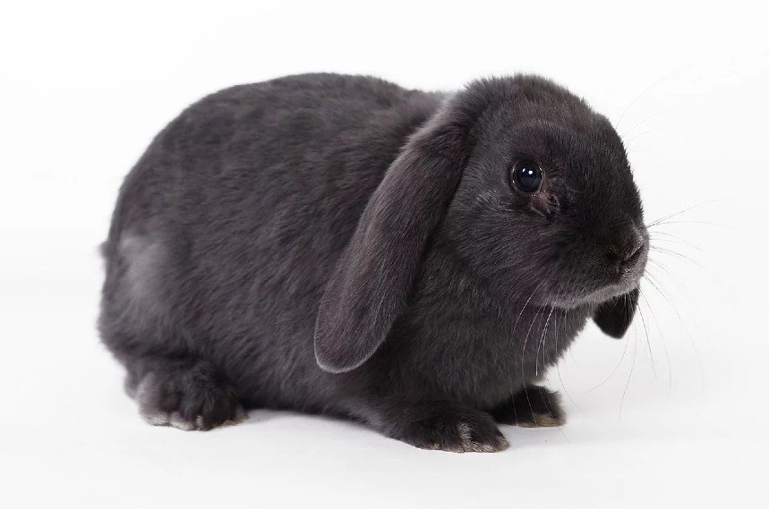 How To Tell If A Rabbit Is Pregnant
