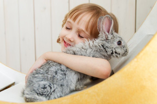 gi stasis in rabbits signs and symptoms
