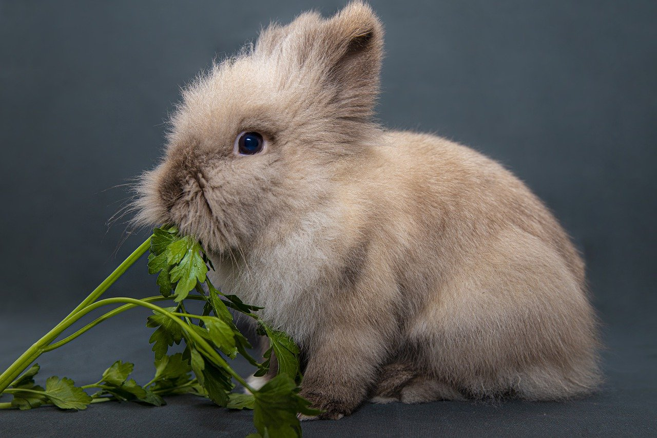 What do rabbits eat