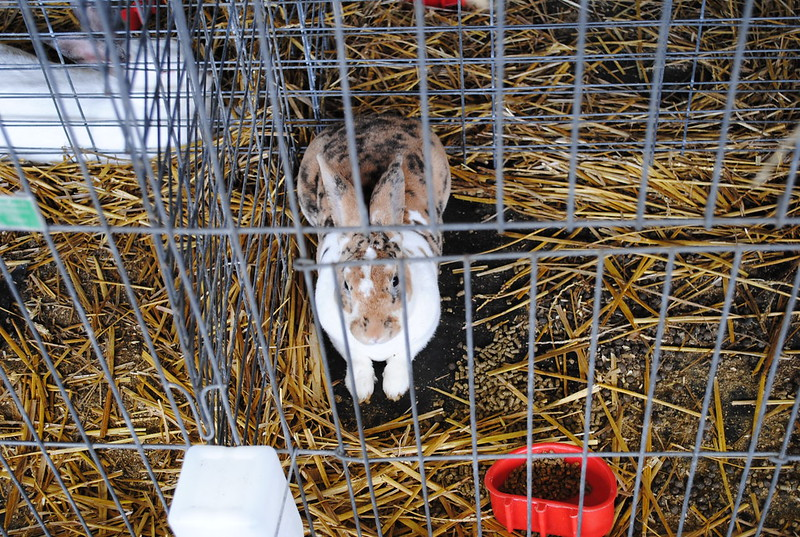 How to clean a rabbit cage